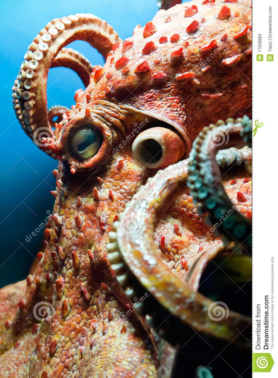 head of an octopus stock image image of life shape