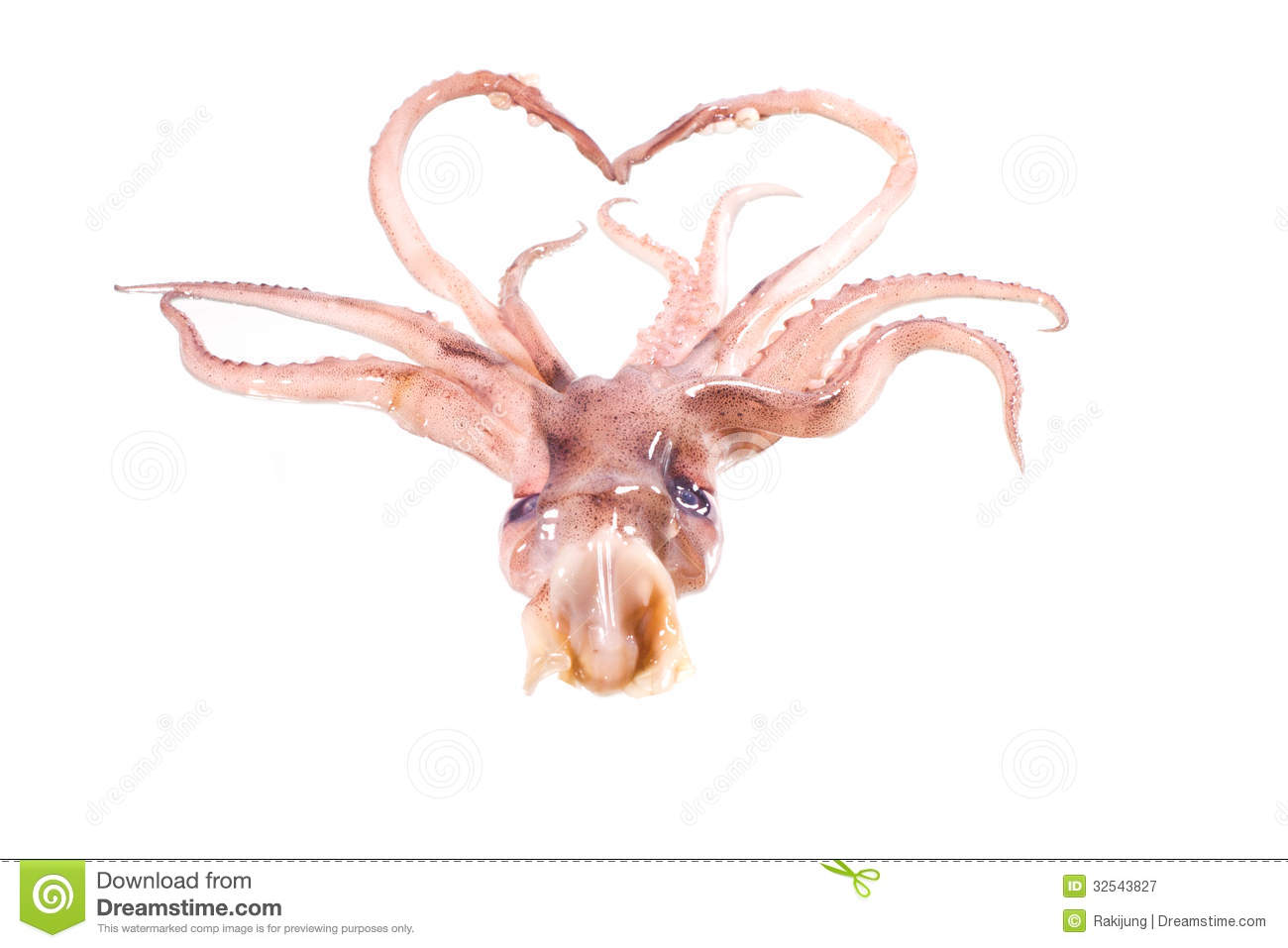 head octopus royalty free stock photography image 32543827 cockroach clipart png cockroach clipart png