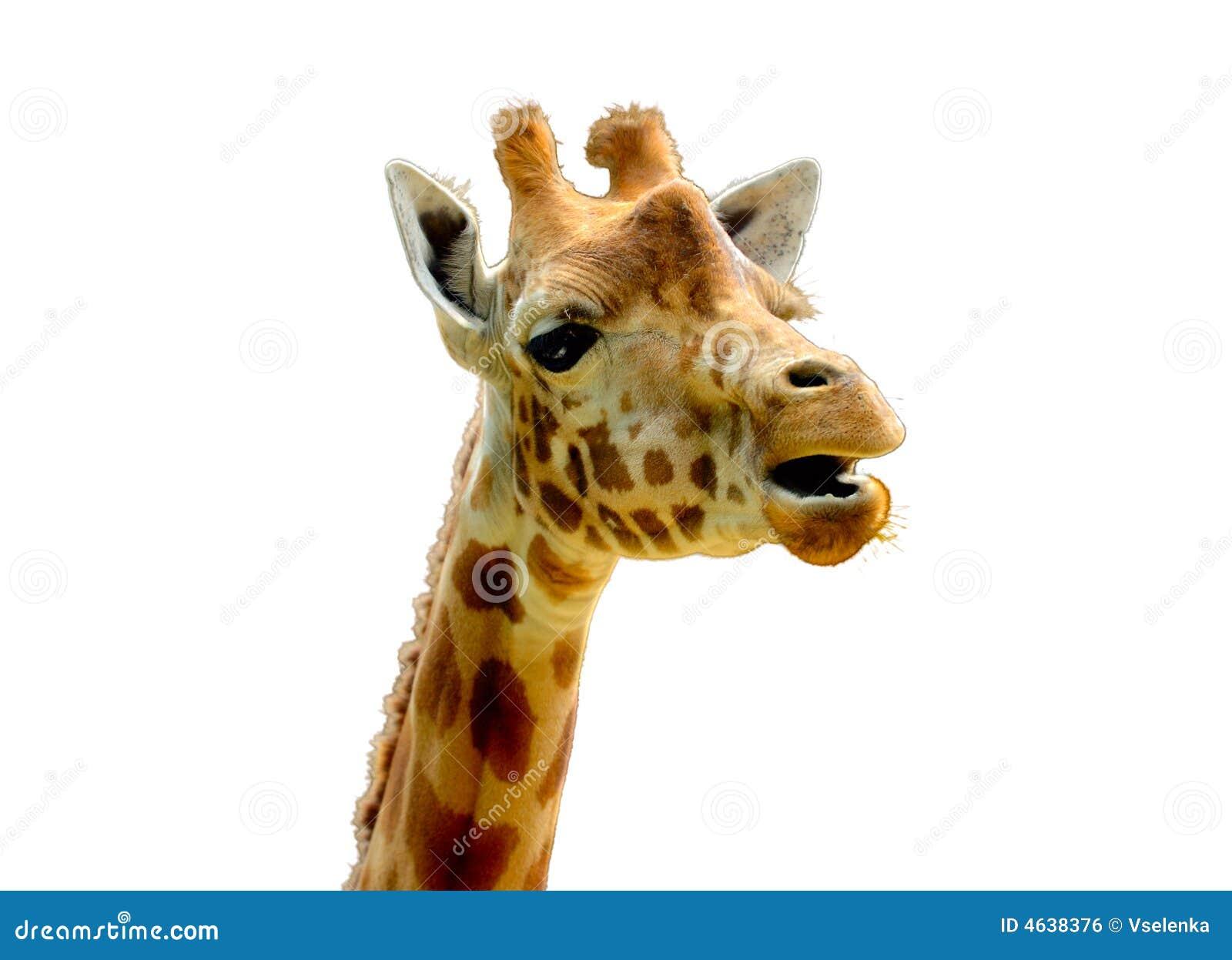 Head og för giraff