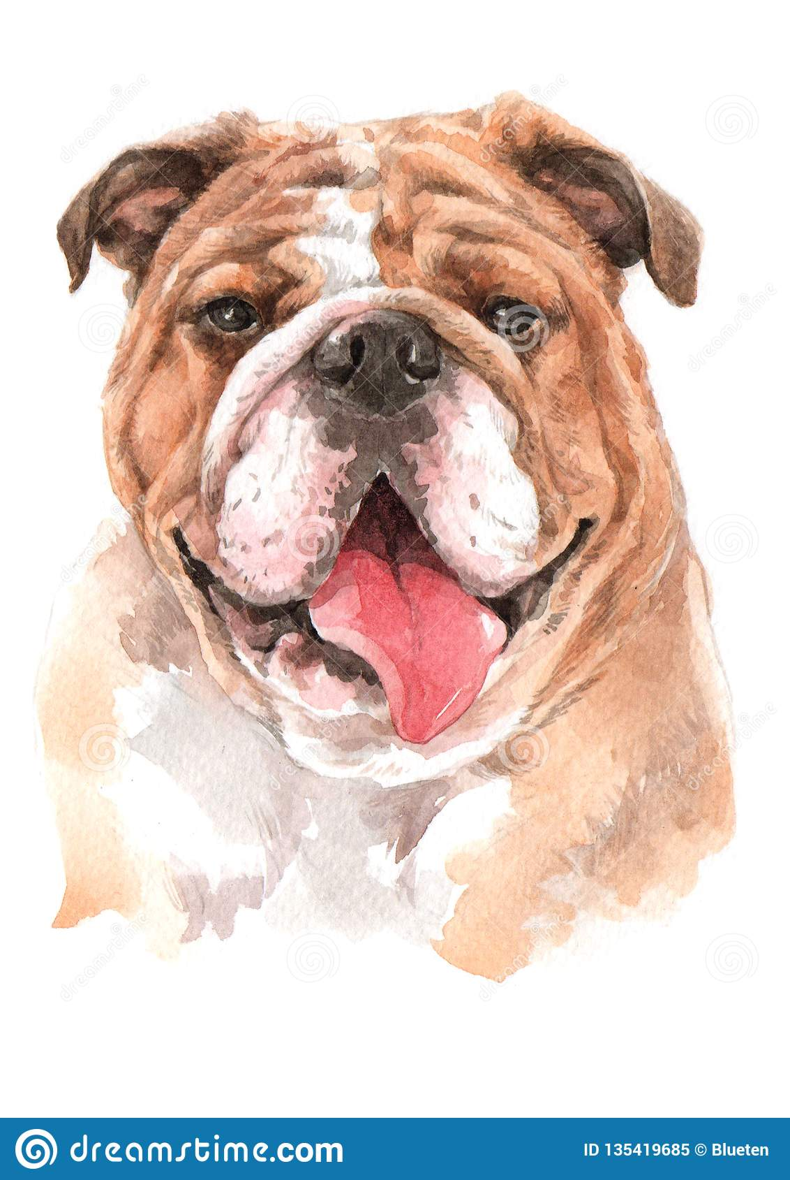 Bulldog Dogs Water Colour 018 Stock Image Image Of Cute Paper 135419685
