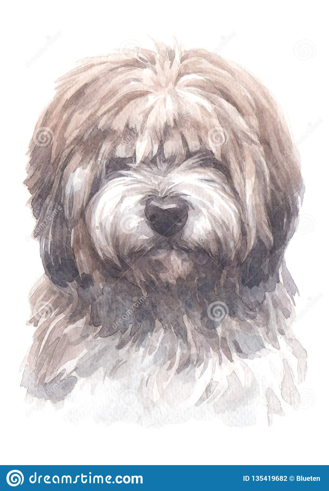 Shih Tzu Dogs Water Colour 017 Stock Photo Image Of Watercolour Puppy 135419682