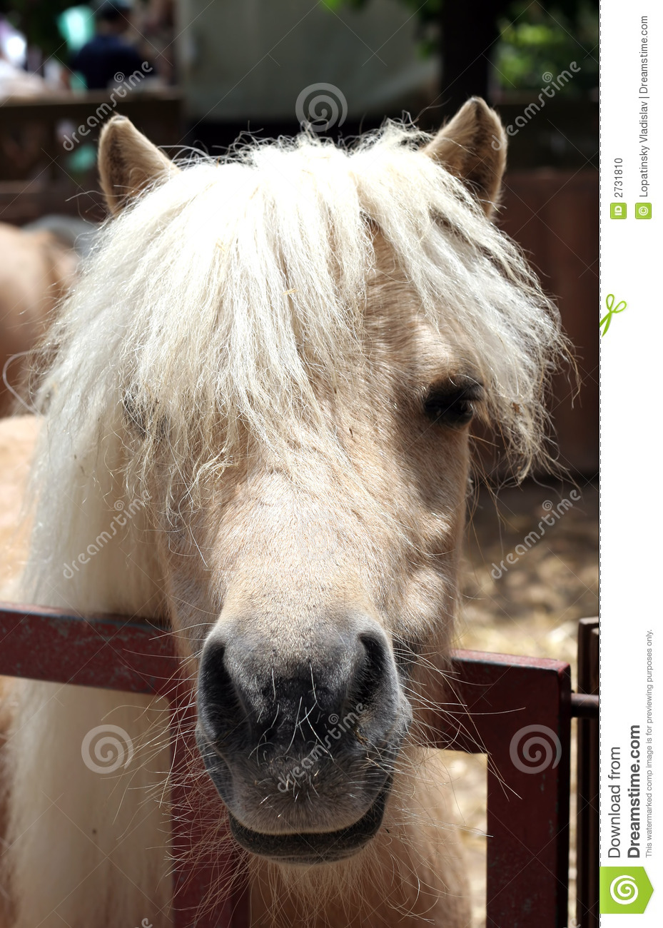 Head pony funny hairstyle stock photo. Image of mare ...