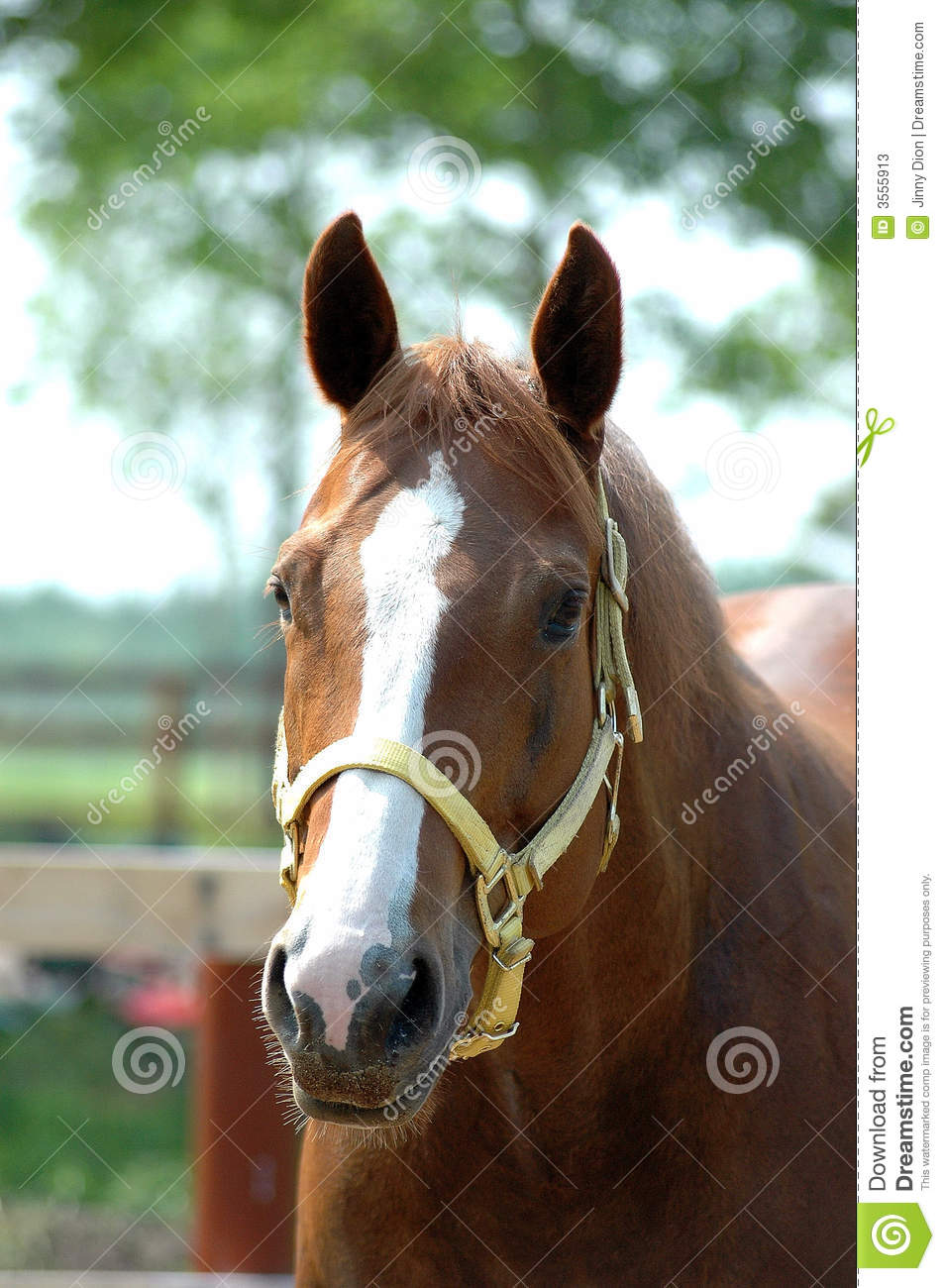 quarter horse head pictures - photo #29