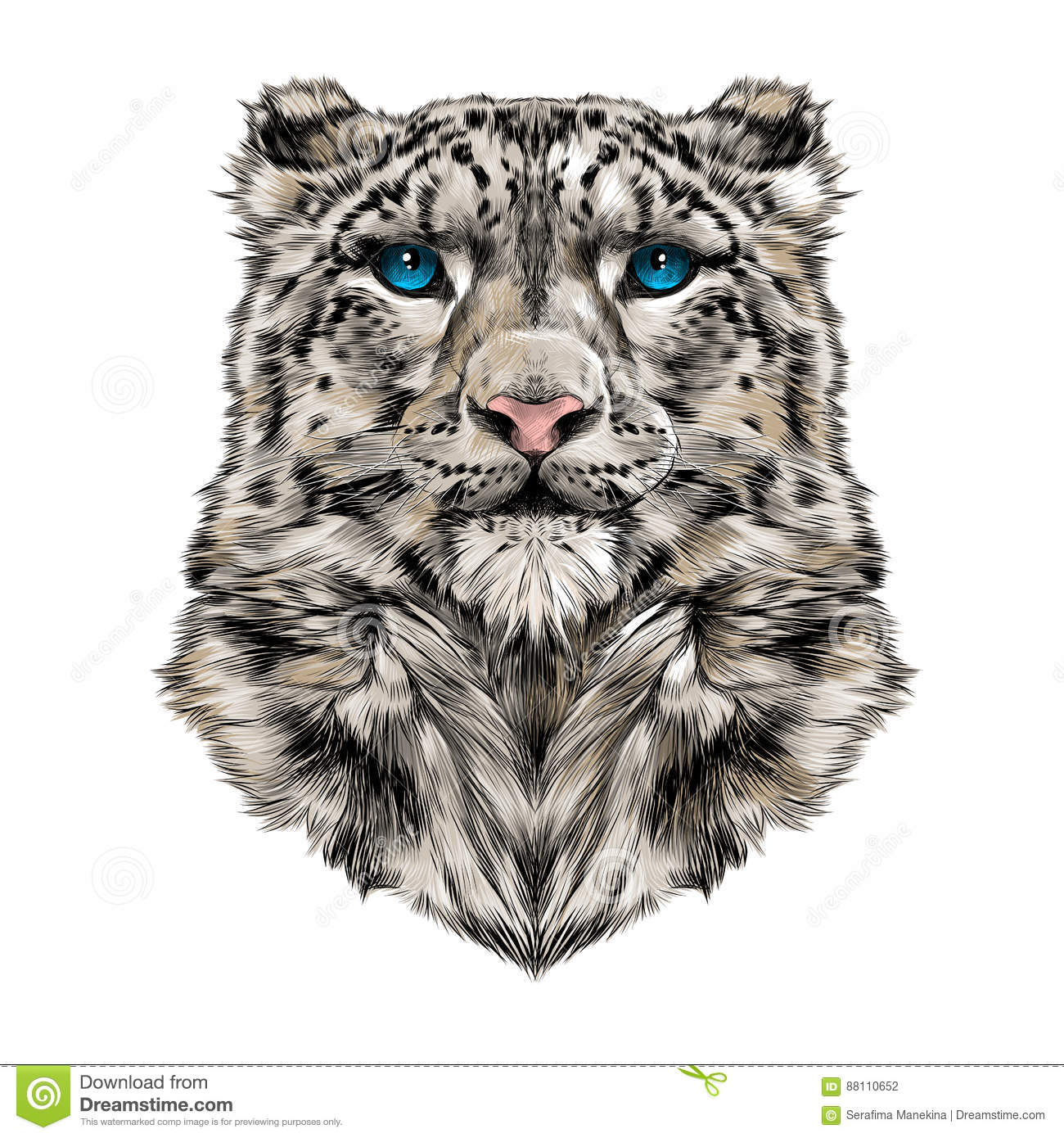Head Of The Snow Leopard Stock Vector Illustration Of