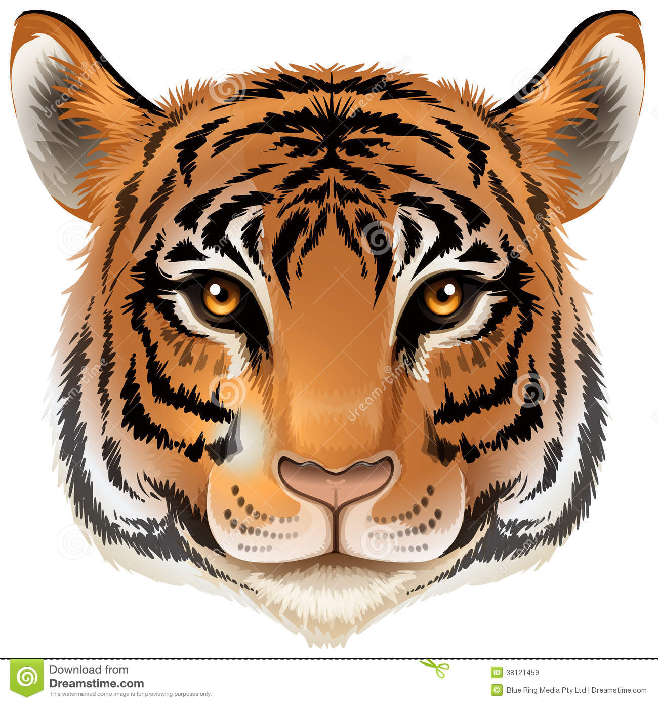 A head of a tiger royalty free stock images image 38121459 - Image tete de tigre ...
