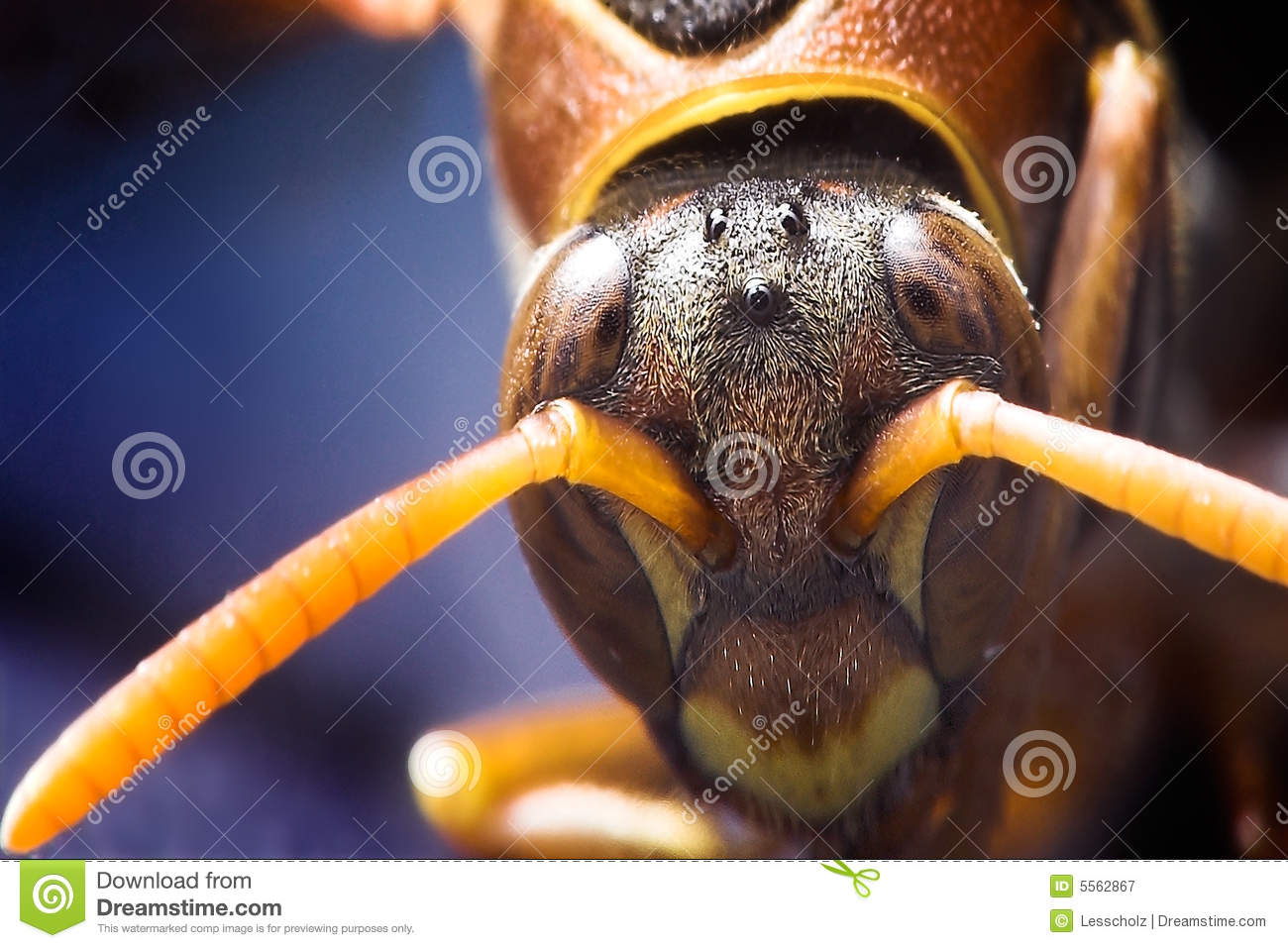 Head of a wasp