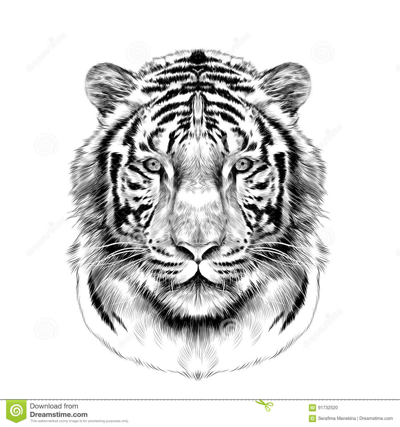 The Head Of The White Tiger Sketch Vector Graphics Stock ...