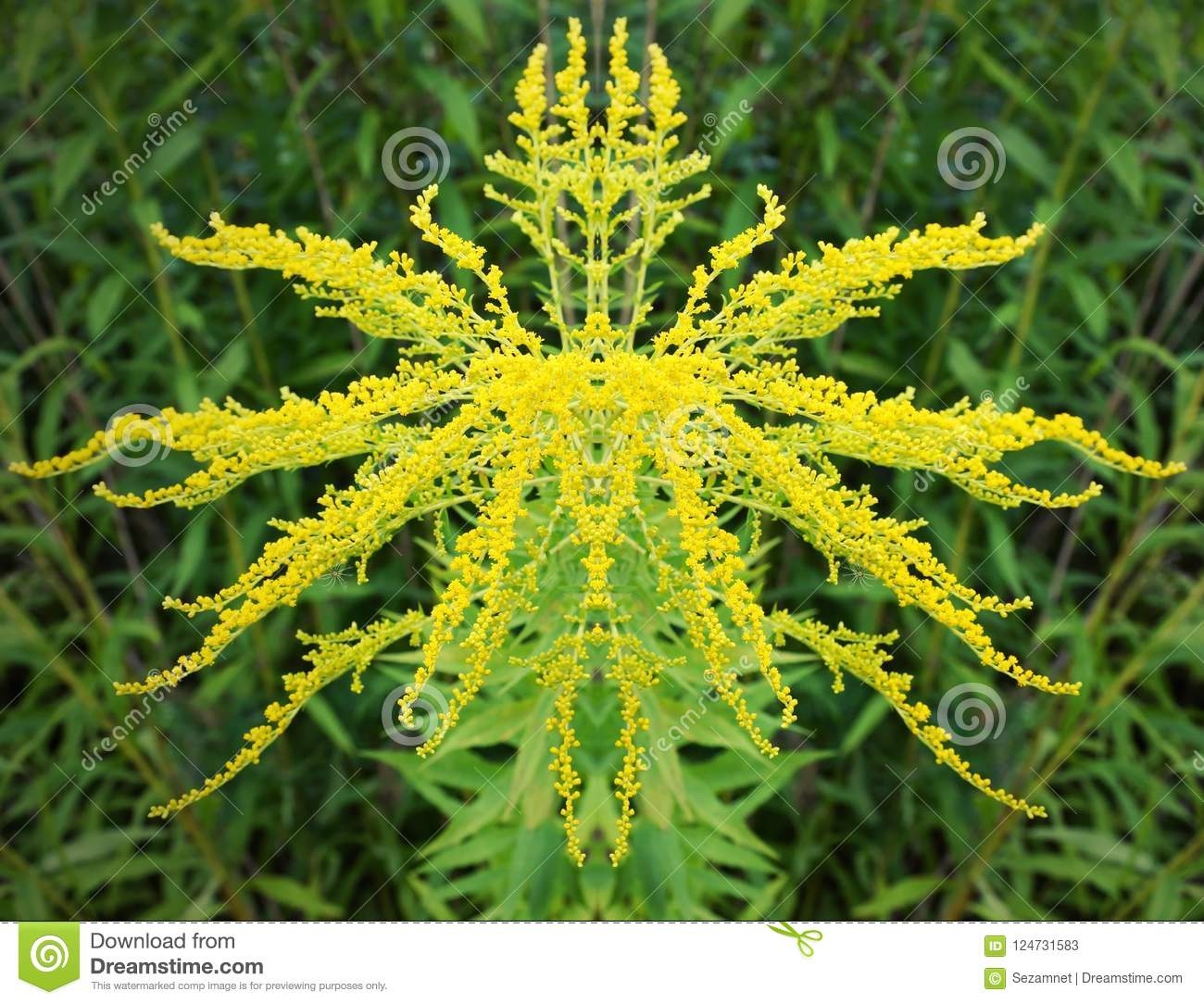 The Head Of The Yellow Mimosa Flower Geometry Is The Correct Sym ...