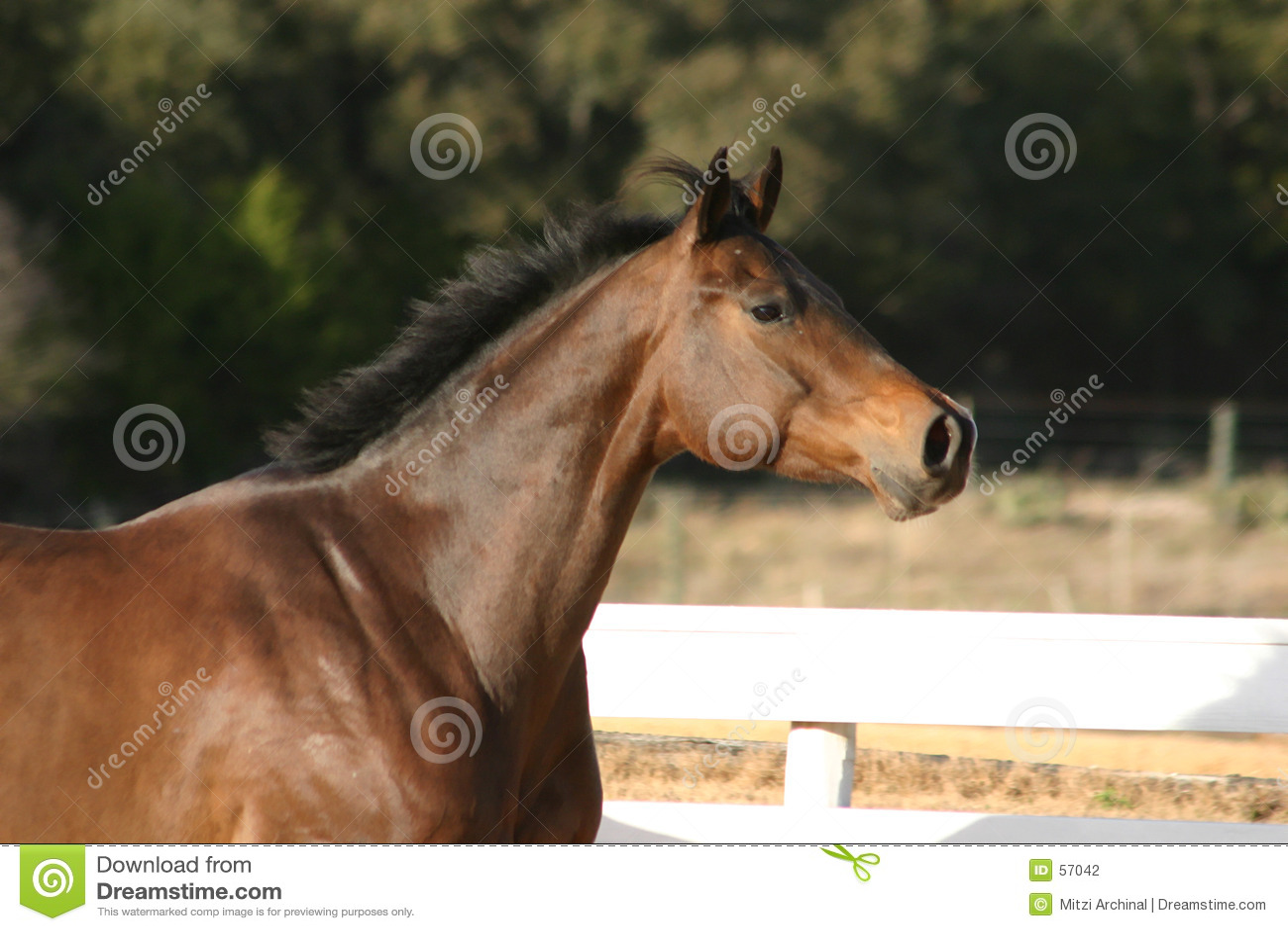Headshot de cheval