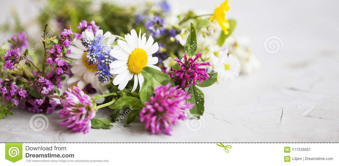 Healing herbs. Medicinal plants and flowers bouquet with mint, c