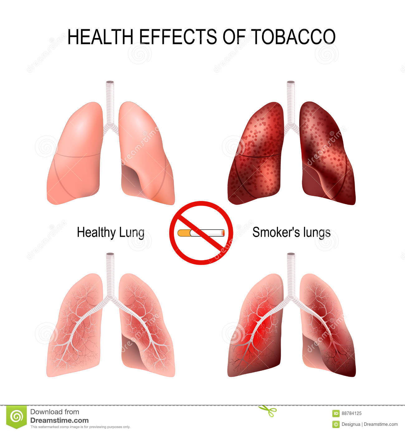 An analysis of the harmful effects of smoking on the human health
