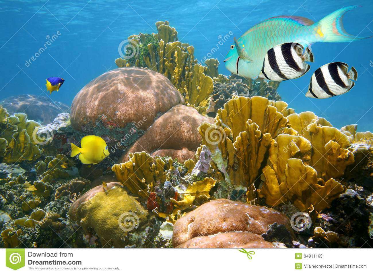 Colorful Coral Reef Fish