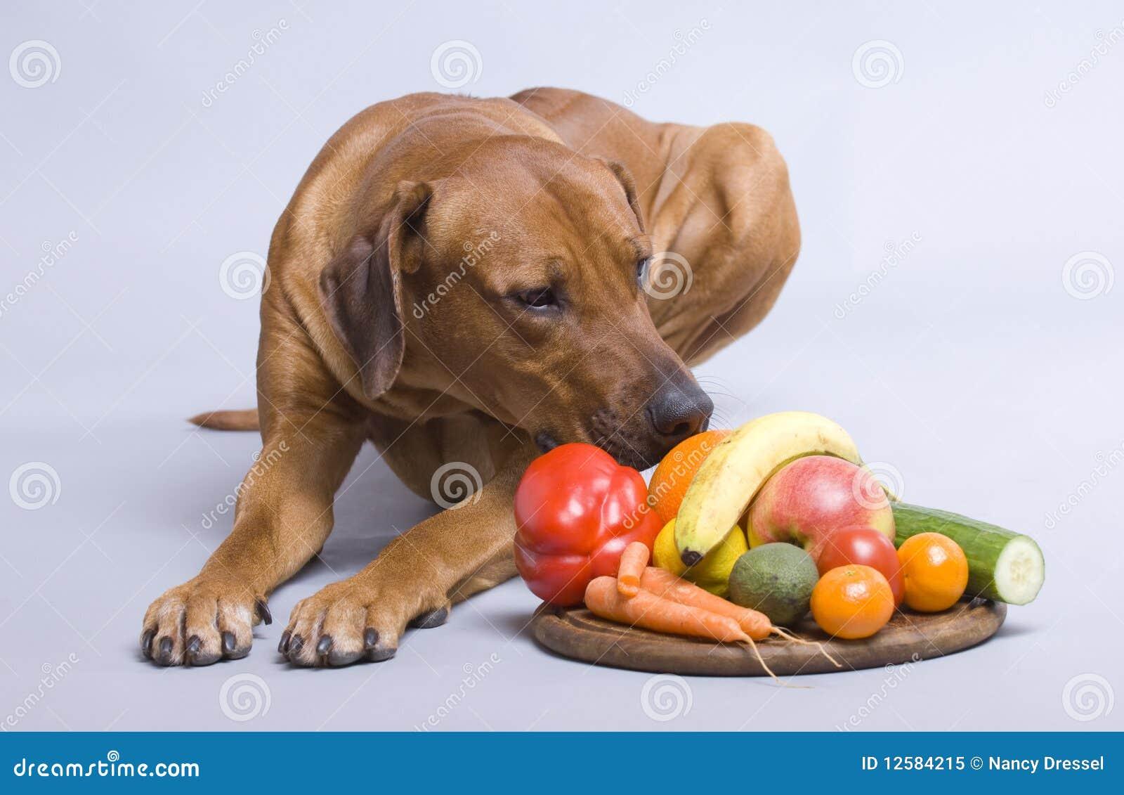 Dog Pushing Food Bowl