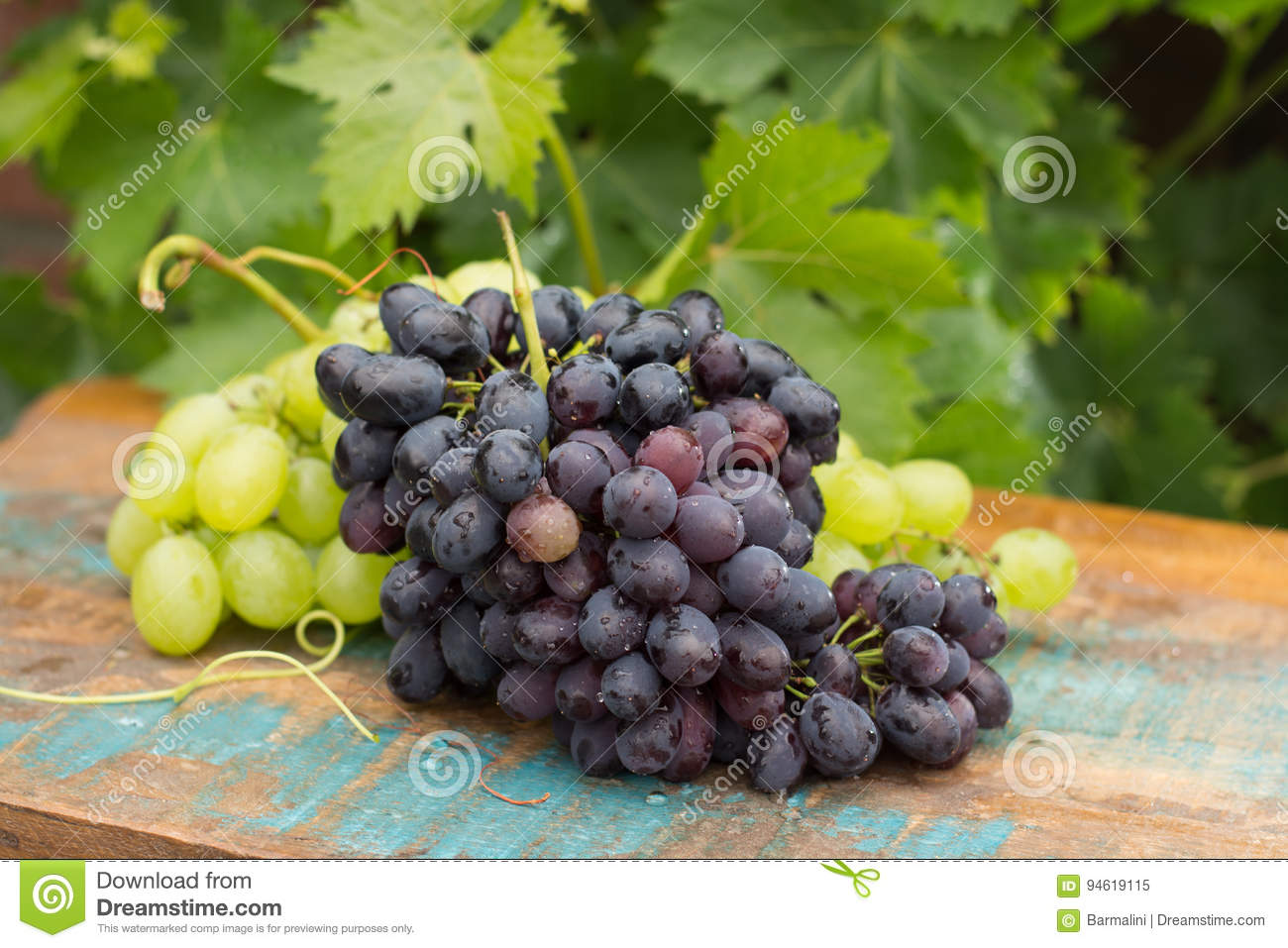 Healthy fruits Red and White wine grapes in the vineyard, dark g
