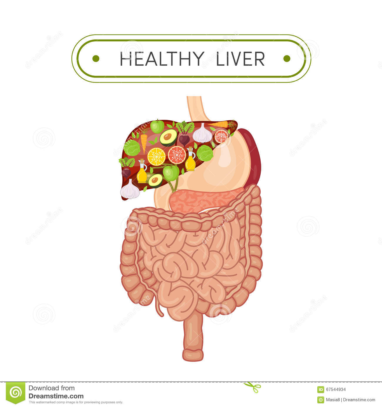 Adrenal Gland Lapel Pin as well Stock Illustrationer Anatomi Av Fisken Image82615676 furthermore Free Anatomy Images in addition Human Digestive System as well Esophagus Clipart. on cartoon esophagus