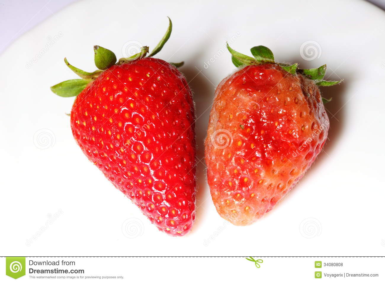 Rotten Strawberries Healthy and rotten spoiled bad