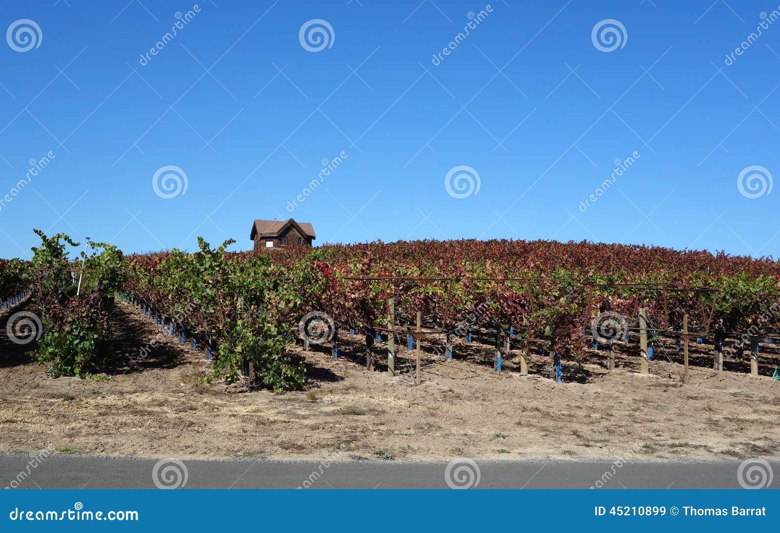Sonoma Vineyard Stock Photo Image 45210899