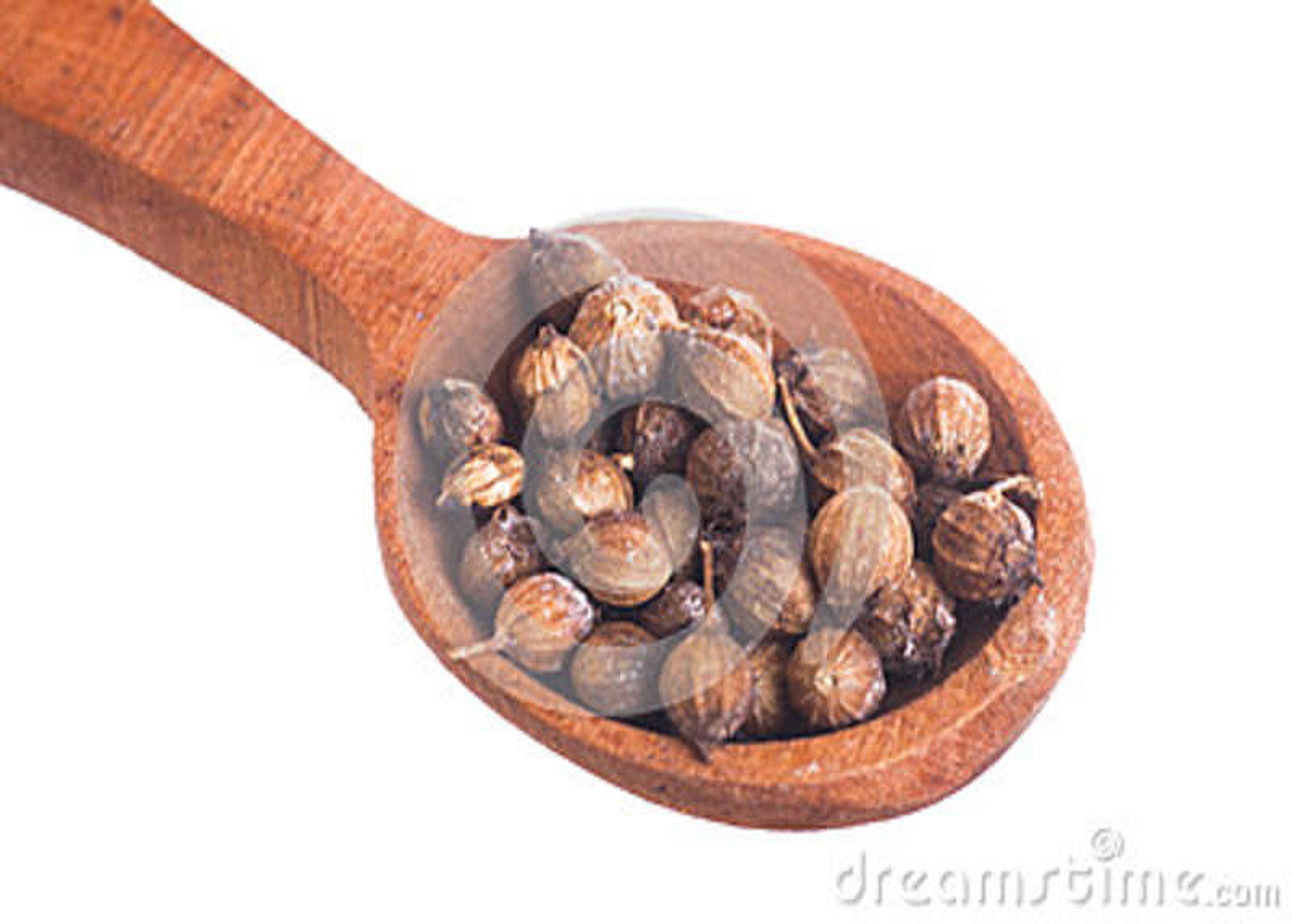 Heap Coriander Seeds Coriandrum Sativum Stock Photo