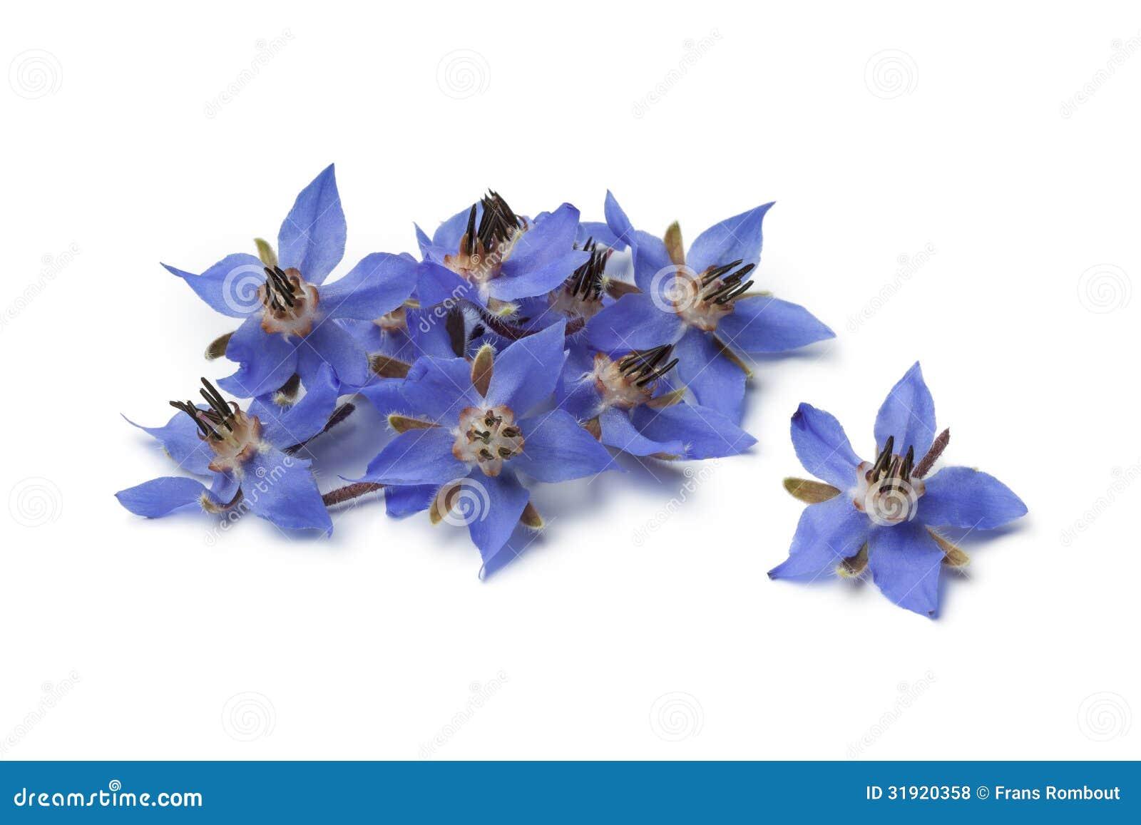 Heap Of Fresh Borage Flowers Stock Photo Image 31920358
