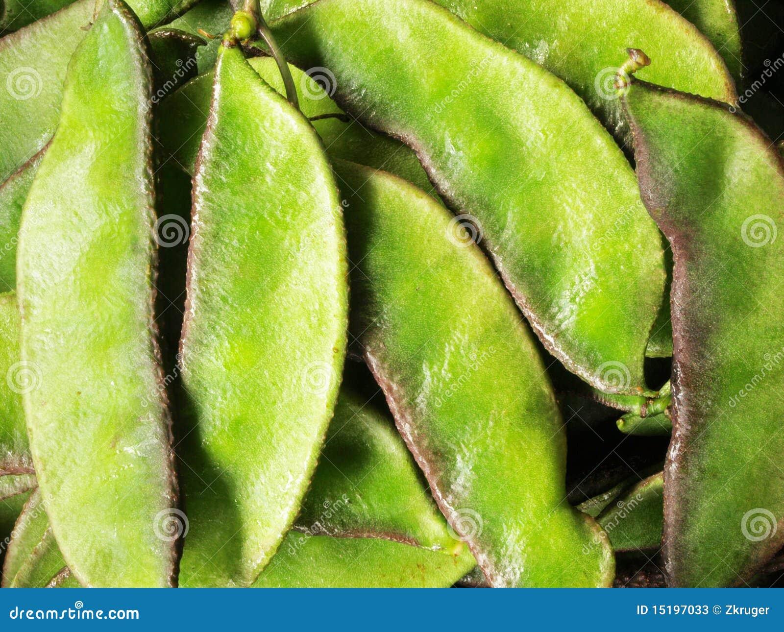 Heap of indian beans