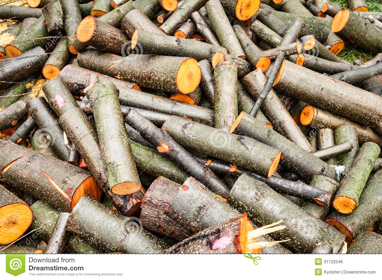 Heap of thin and thick wood log raw timber stock photo