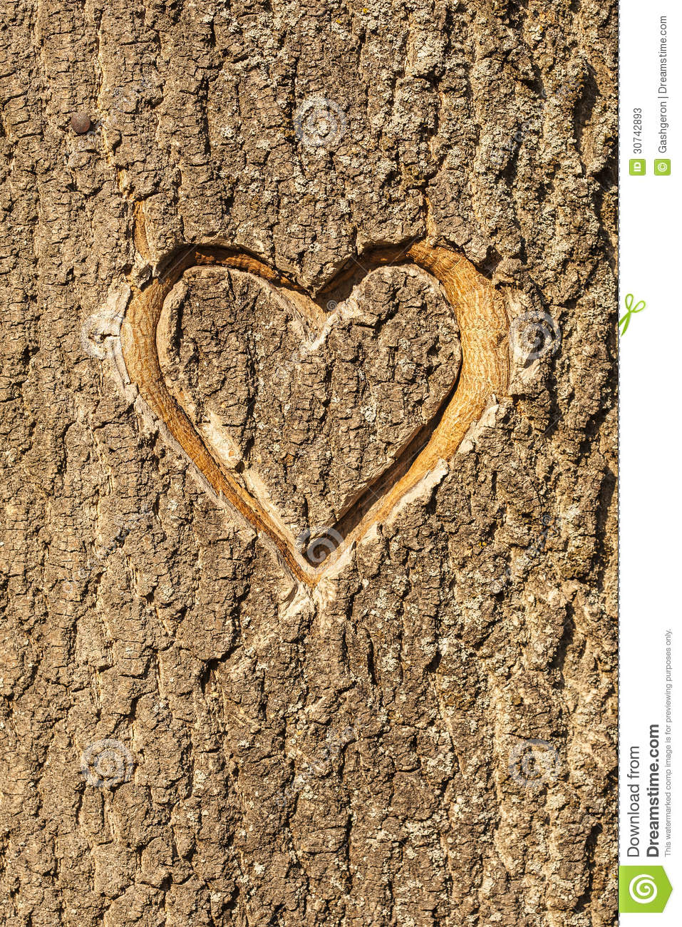 Heart Carved In The Bark Of A Tree. Stock Photos - Image ...