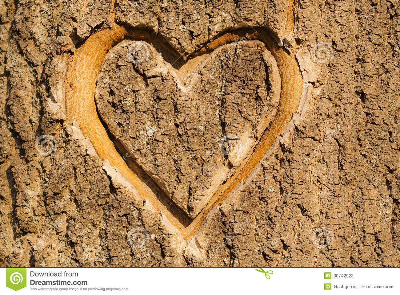Heart carved in the bark stock image of