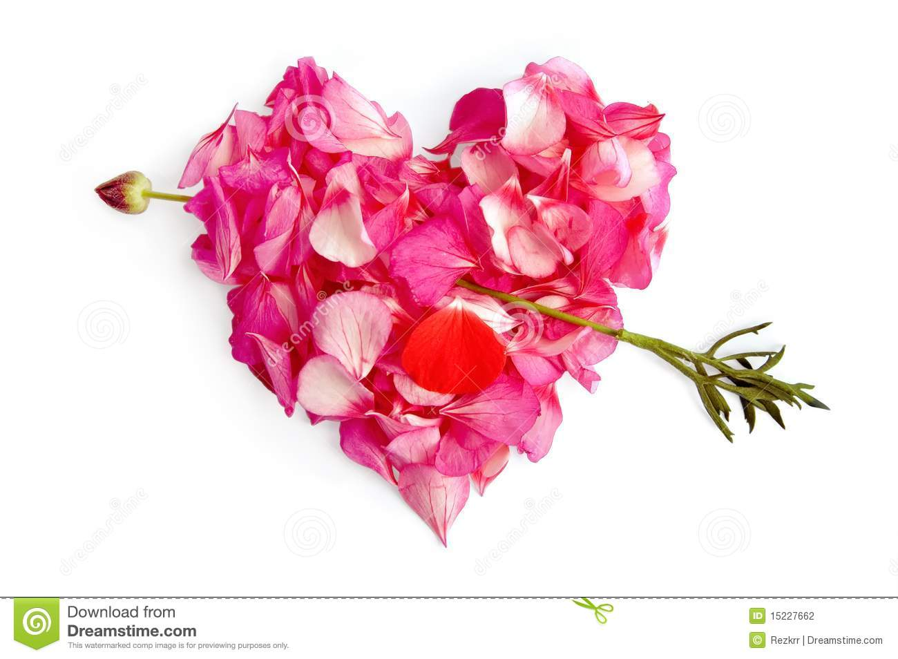 the heart of the flower petals with an arrow stock photography, Beautiful flower