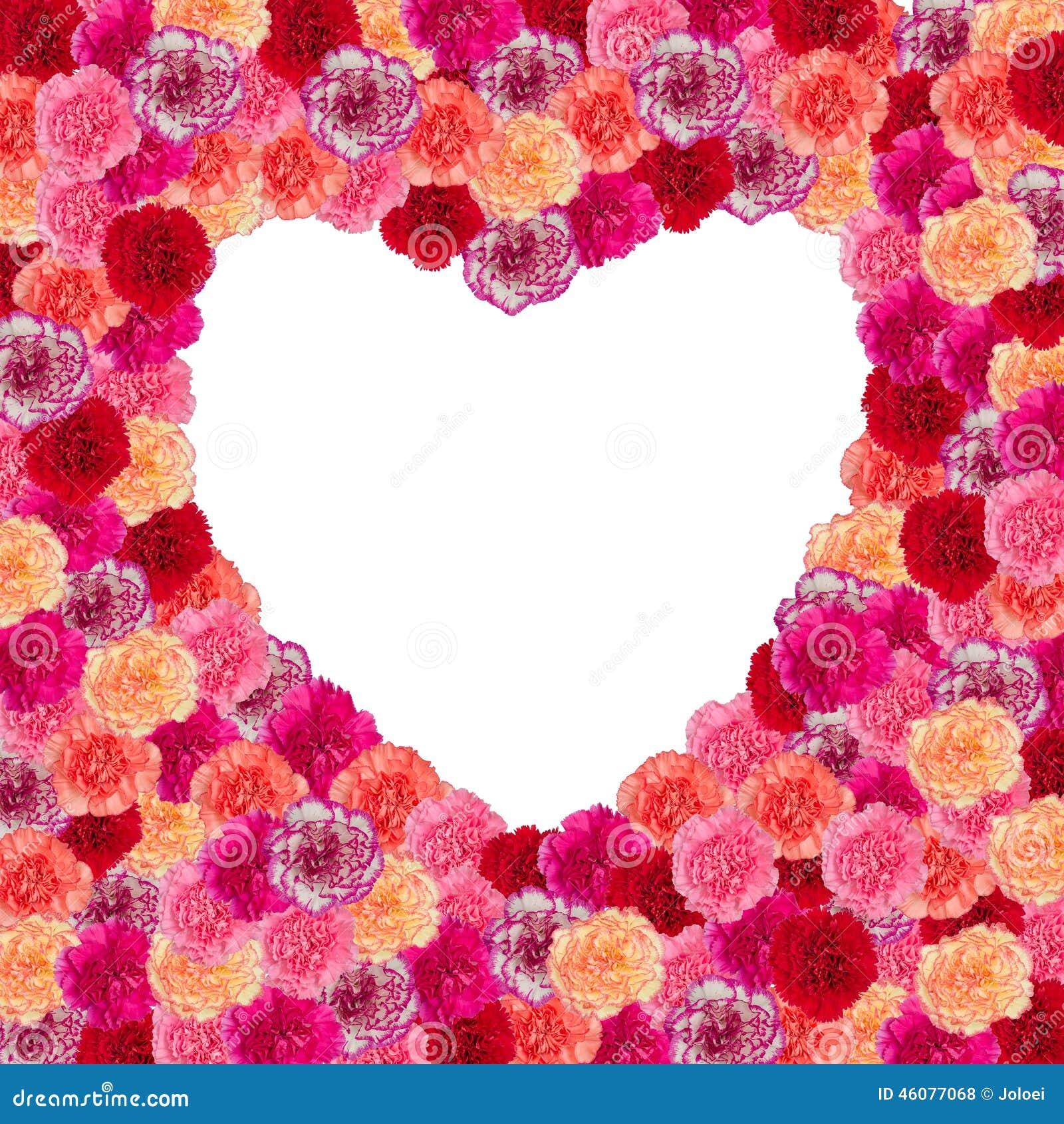 Heart Frame Of Carnation Flower Stock Photo