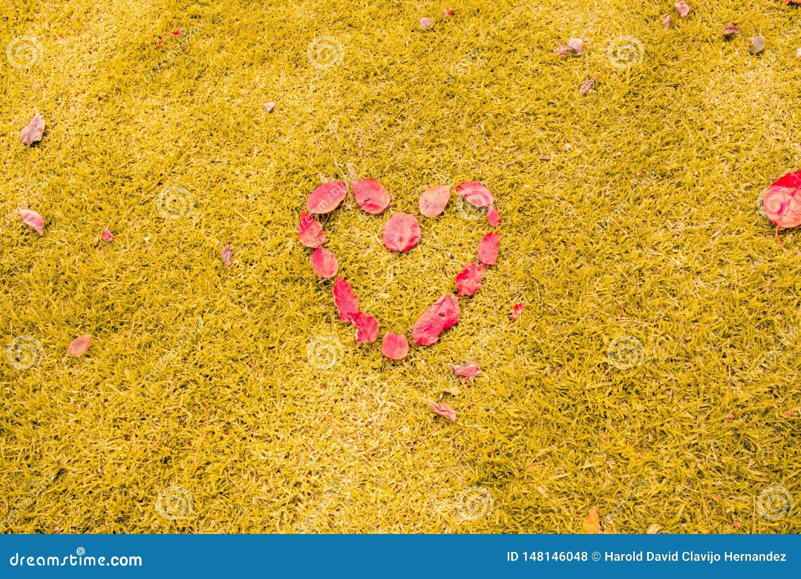 Heart in the Grass. Romantic concept.