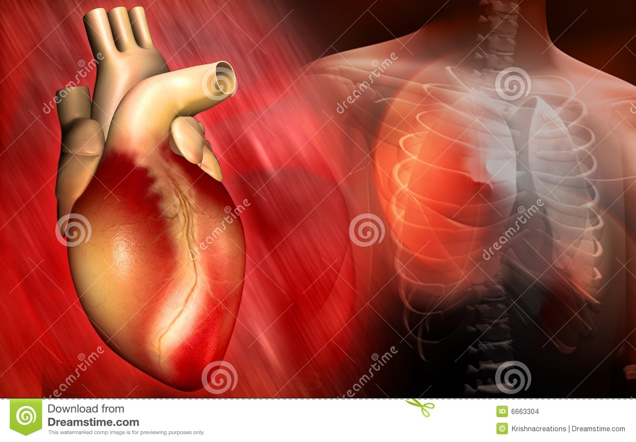 Heart And Human Body Stock Illustration Illustration Of Auricle