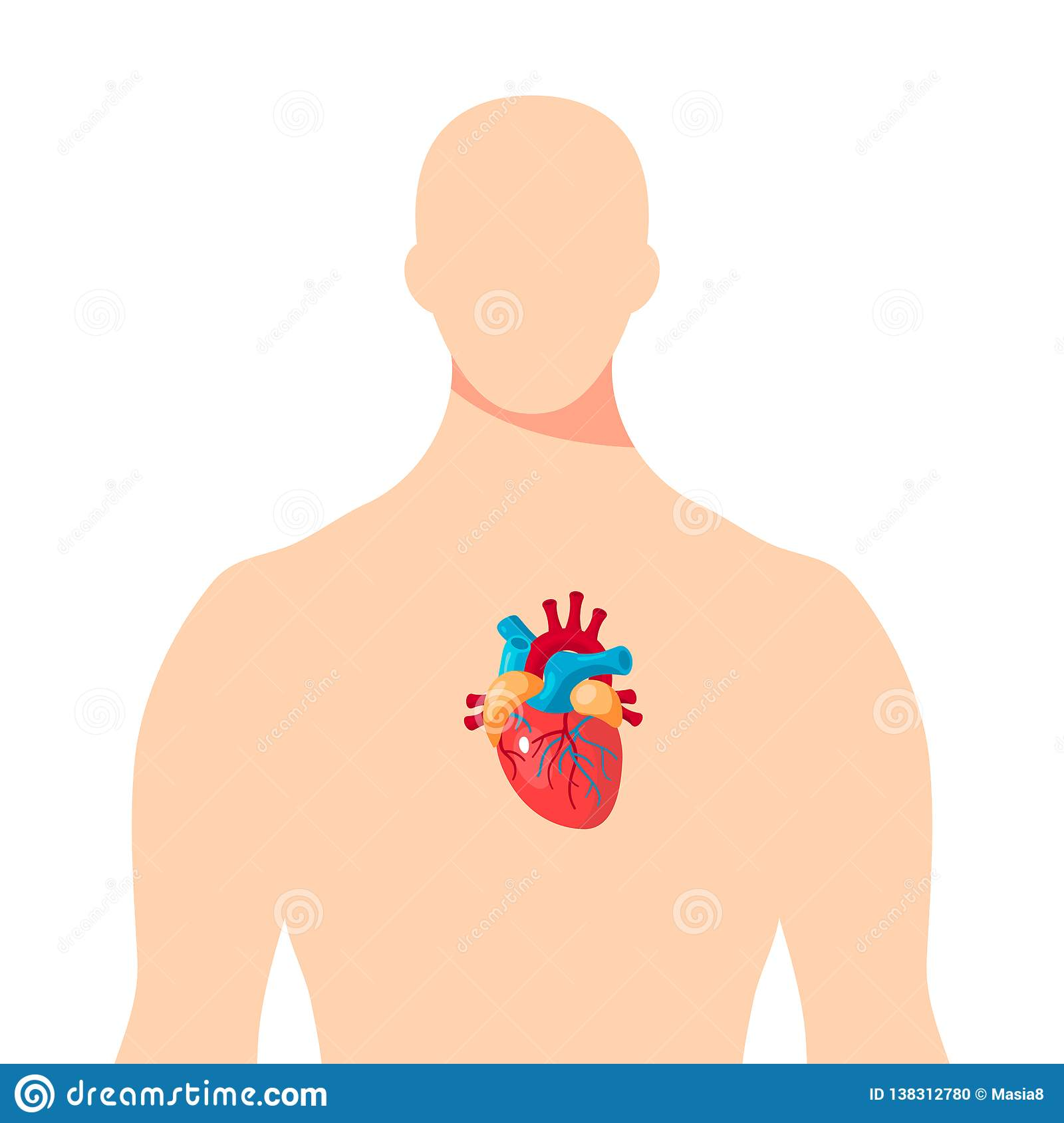 heart inside the male human body vector stock vector illustration of cardiovascular artery 138312780 https www dreamstime com heart inside male human body vector heart inside male human body vector illustration articles educational textbooks image138312780