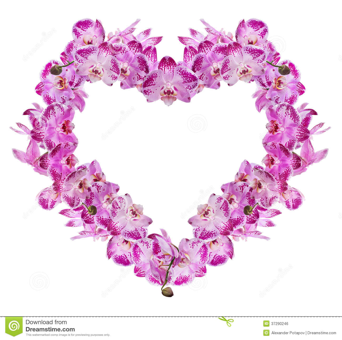 orchid flowers heart. stock photo  image, Beautiful flower