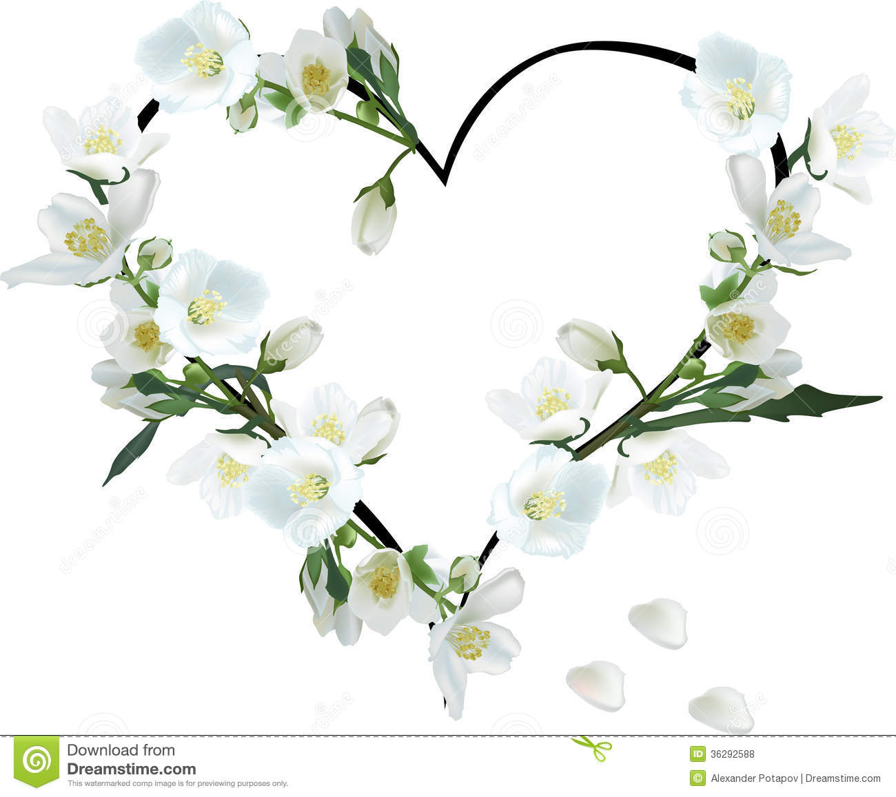 Heart From Jasmine Flowers Isolated On White Stock Vector
