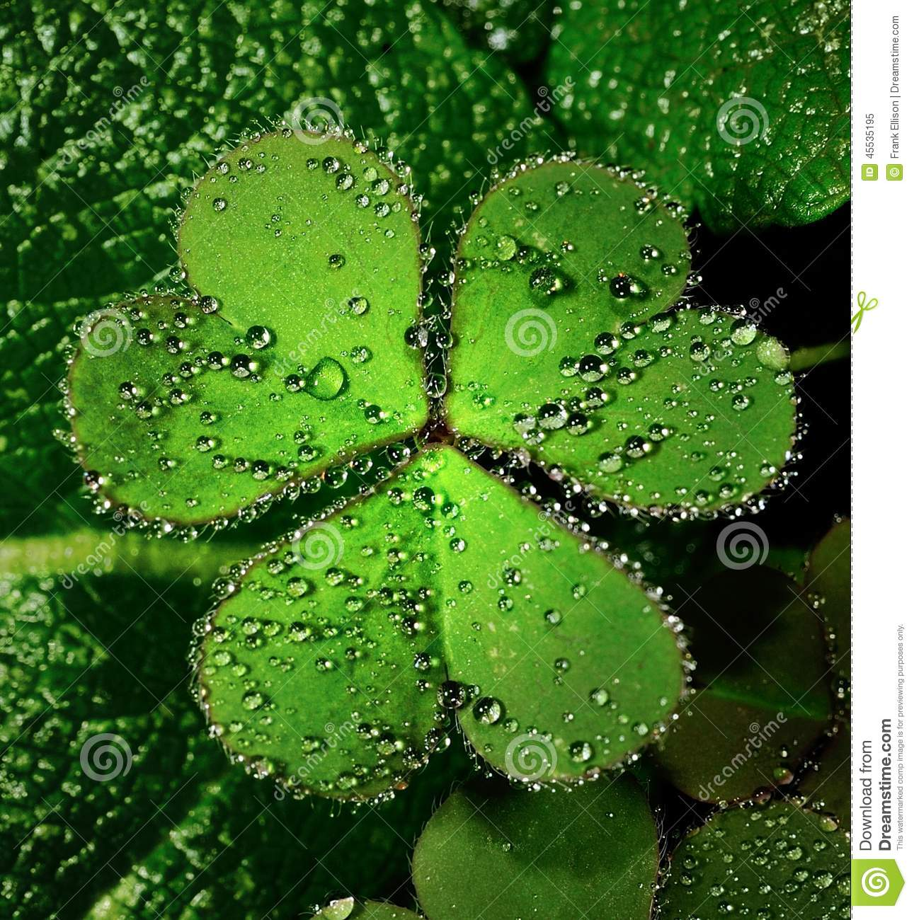 heart leaf clover stock photo image 45535195 four leaf clover vector free four leaf clover vector clipart