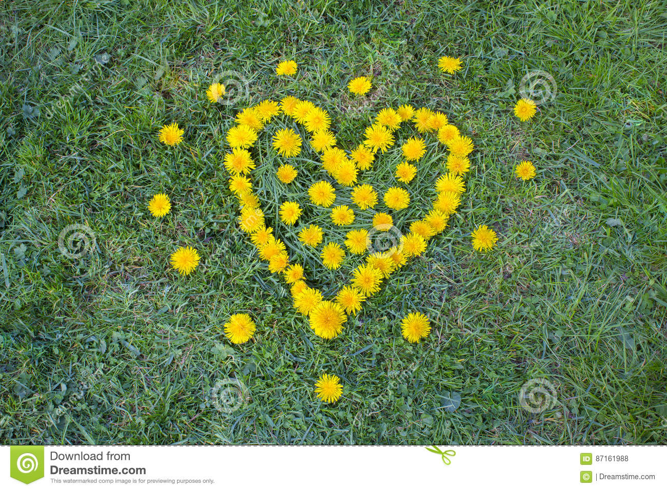 Heart made with dandelion yellow flowered weed flowers on the grass royalty free stock photo mightylinksfo