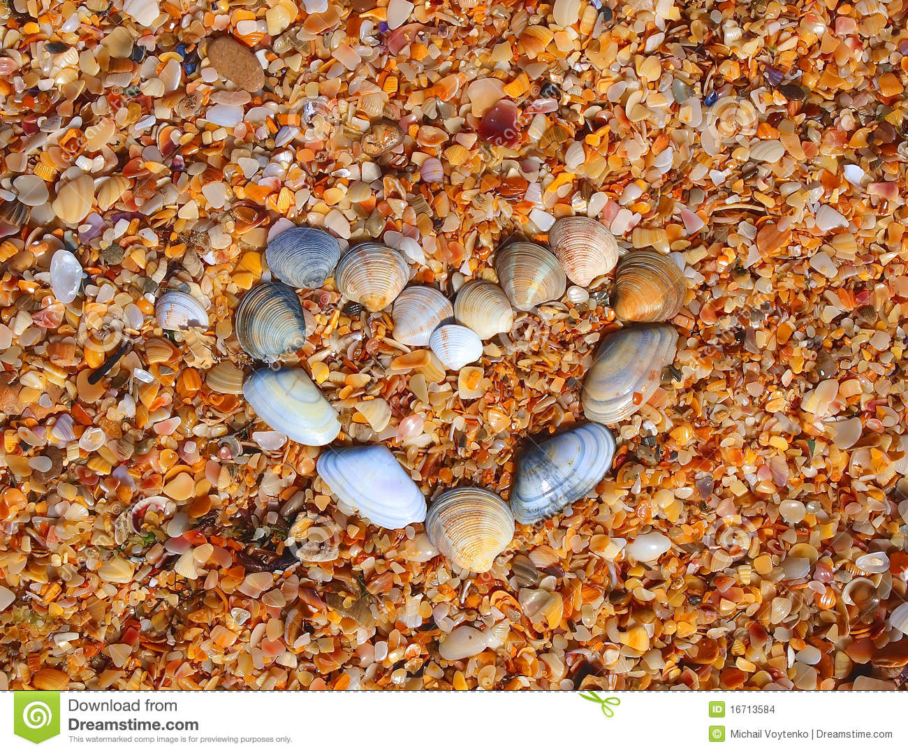 Heart and made of sea shells on the beach stock images for What are shells made of