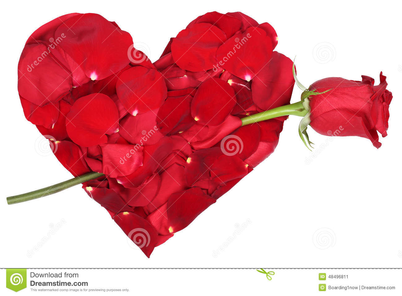 heart from petals with red rose love topic on valentine s and mo
