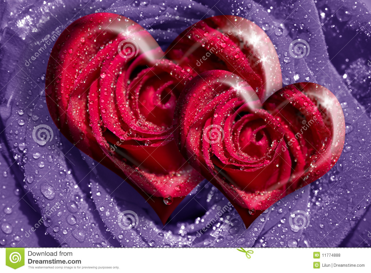 Heart roses stock photo image of beautiful flower paths - Pics of roses and hearts ...