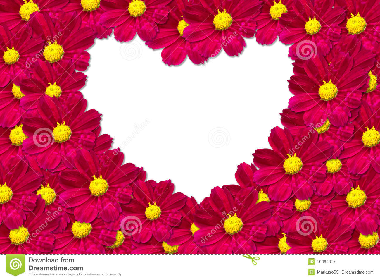 daisy heart shape stock photos, images,  pictures   images, Beautiful flower