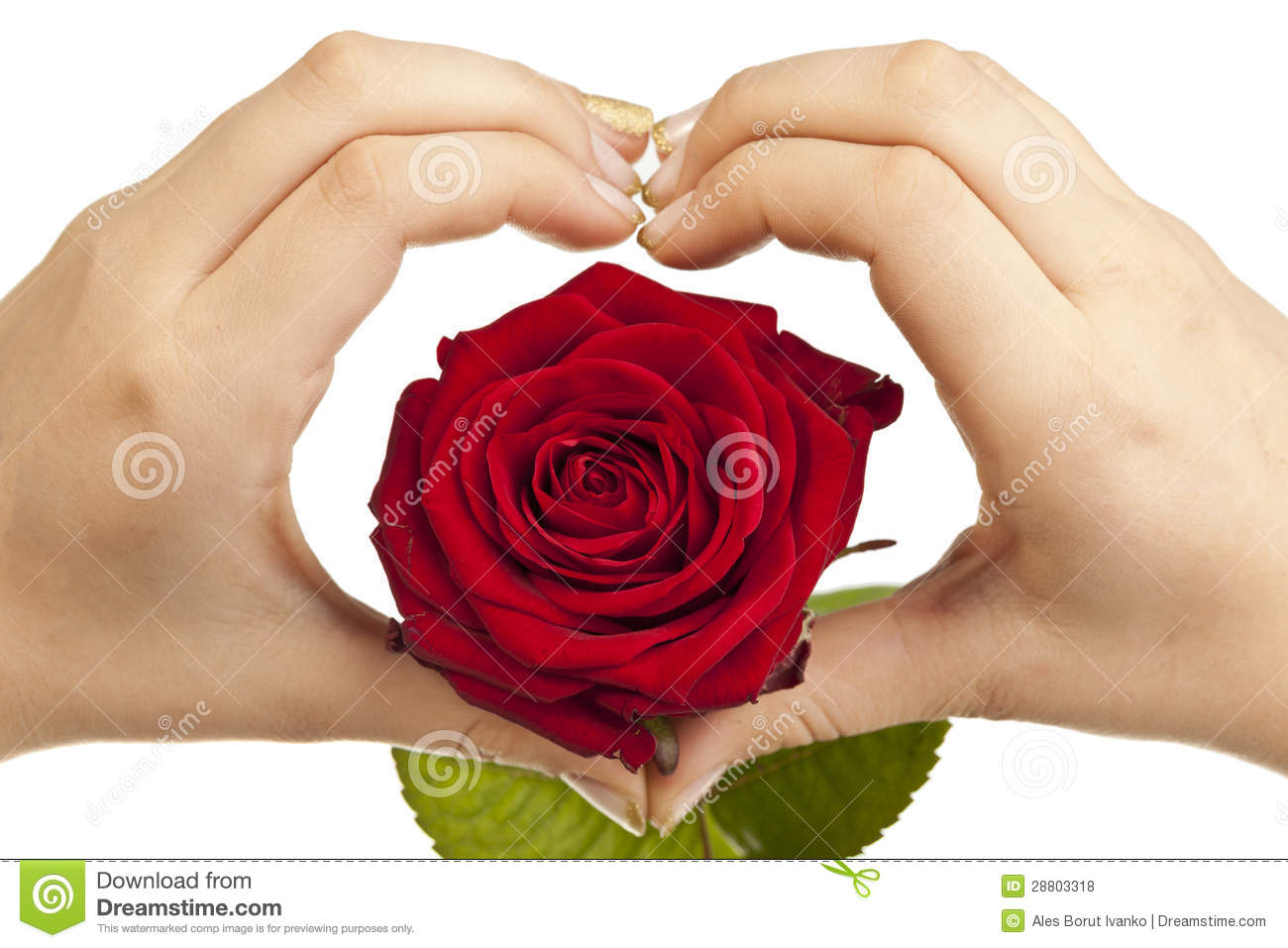 heart shape with hands and red rose stock photo image of palm