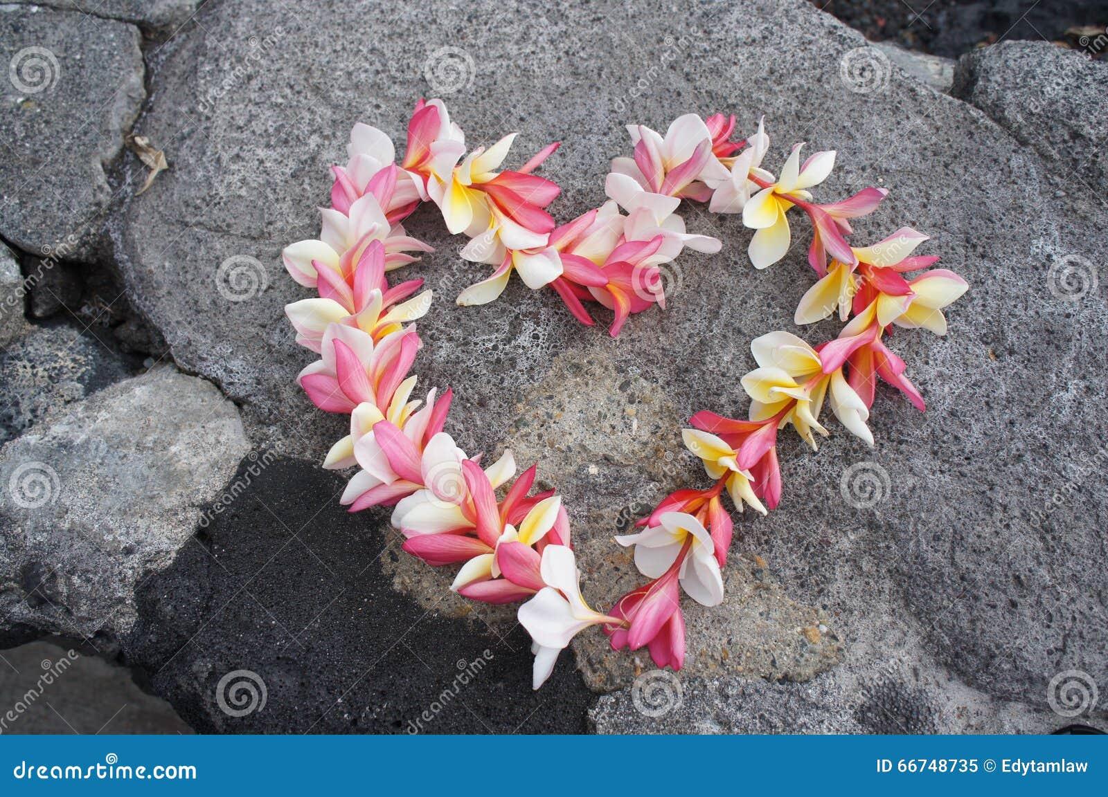 Heart shaped hawaiian plumeria lei stock image image of perfume download comp izmirmasajfo