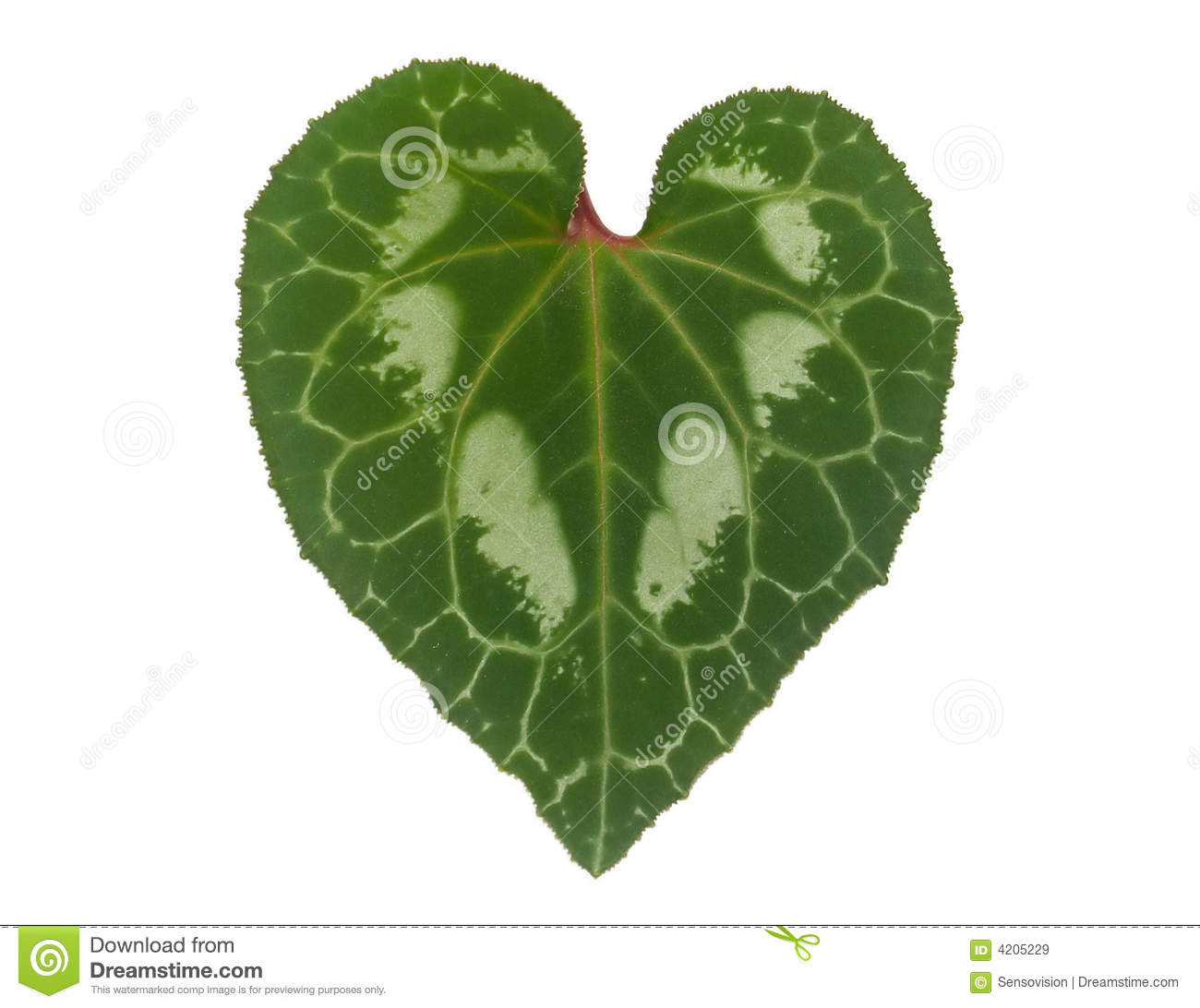 Heart Shaped Leaf Royalty Free Stock Images Image 4205229