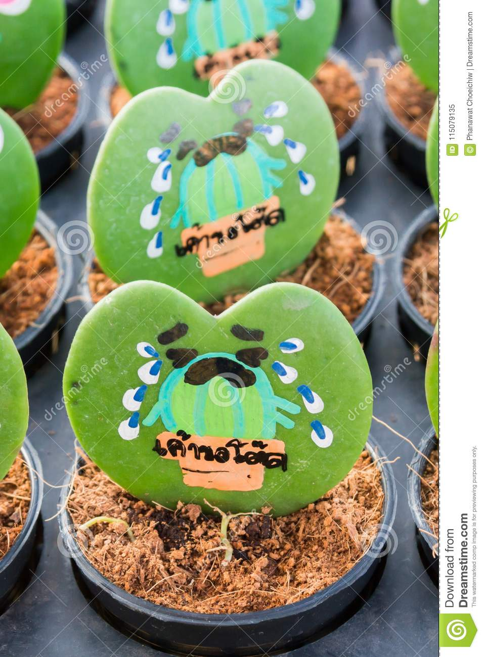 Heart Shaped Plant Kerrii Hoya With Painted Roses And Message Stock