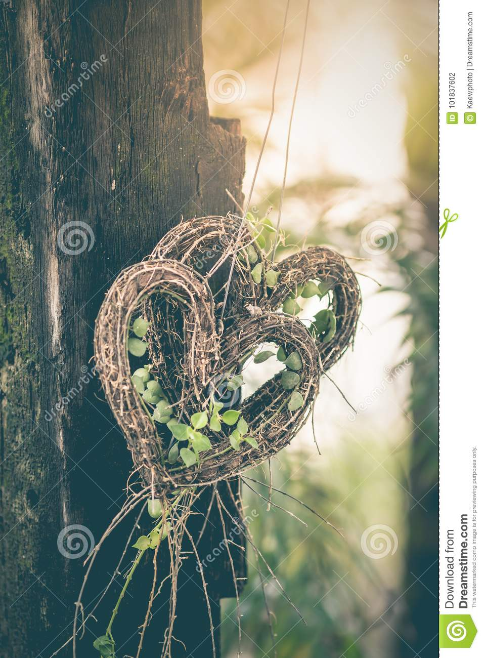 Heart Shaped Tree Is A Symbol Of Love As A Background Image Stock