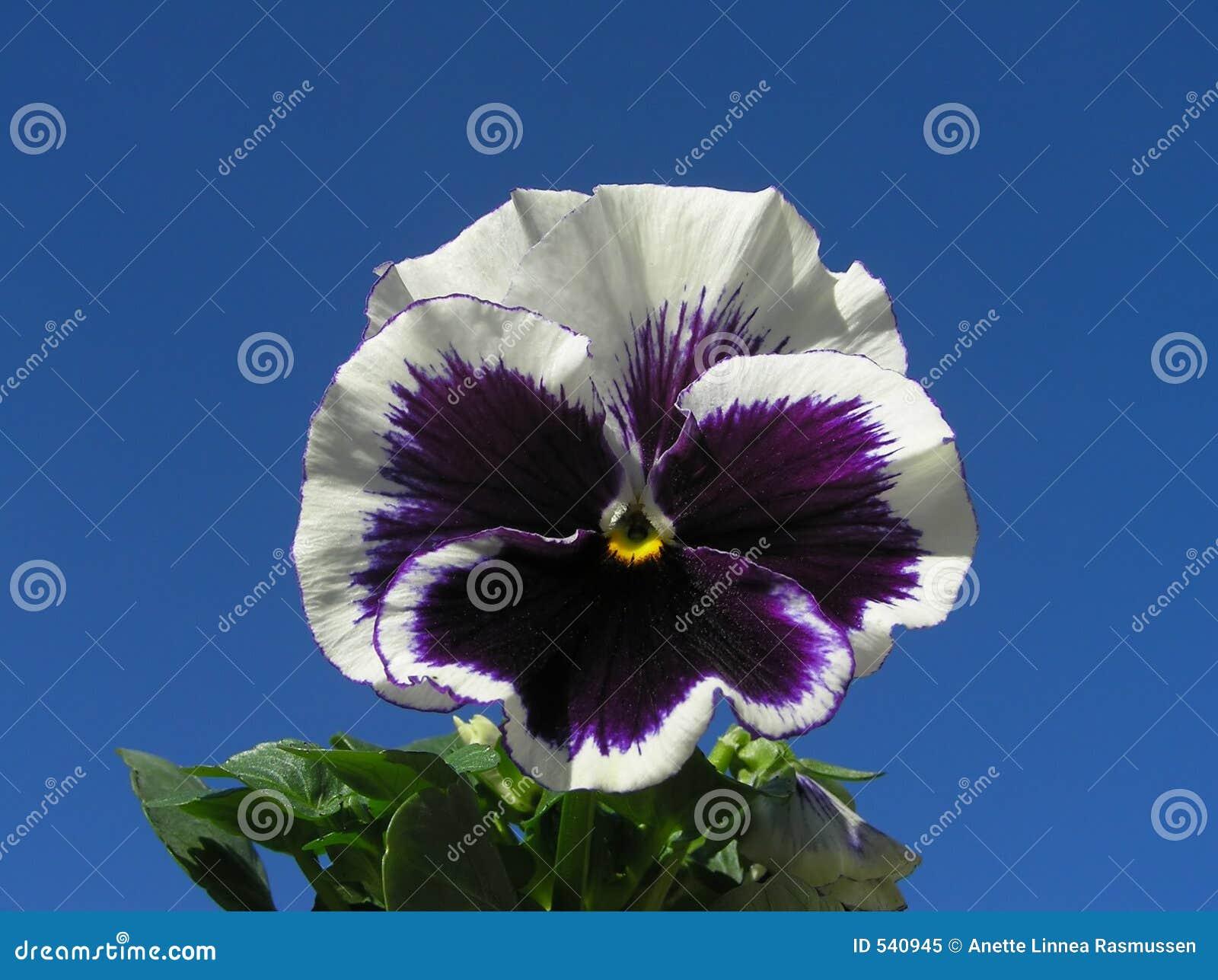 Download Heartease 库存图片. 图片 包括有 庭院, 天空, 五颜六色, 全能, 概念, 宏指令, 玻色子, 背包 - 540945
