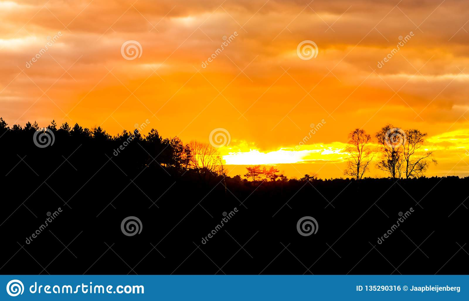 Heather and forest landscape dark silhouette at sunset, vibrant orange sky and clouds because of sundown