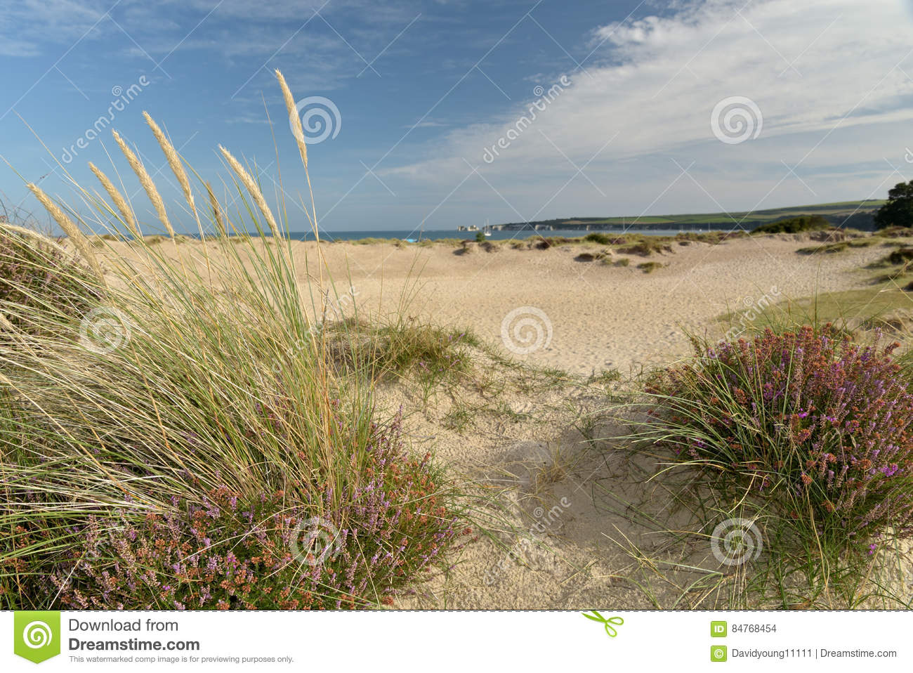 Heather Walk By Studland Bay Stock Photo - Image of ramble, shrub