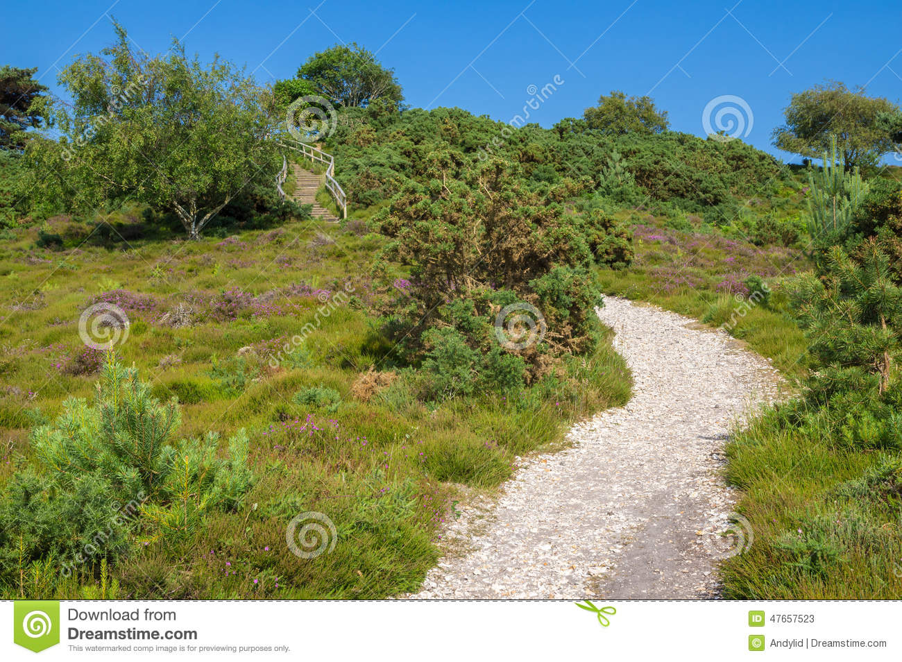 Heathland Royalty Free Stock Photography Cartoondealer