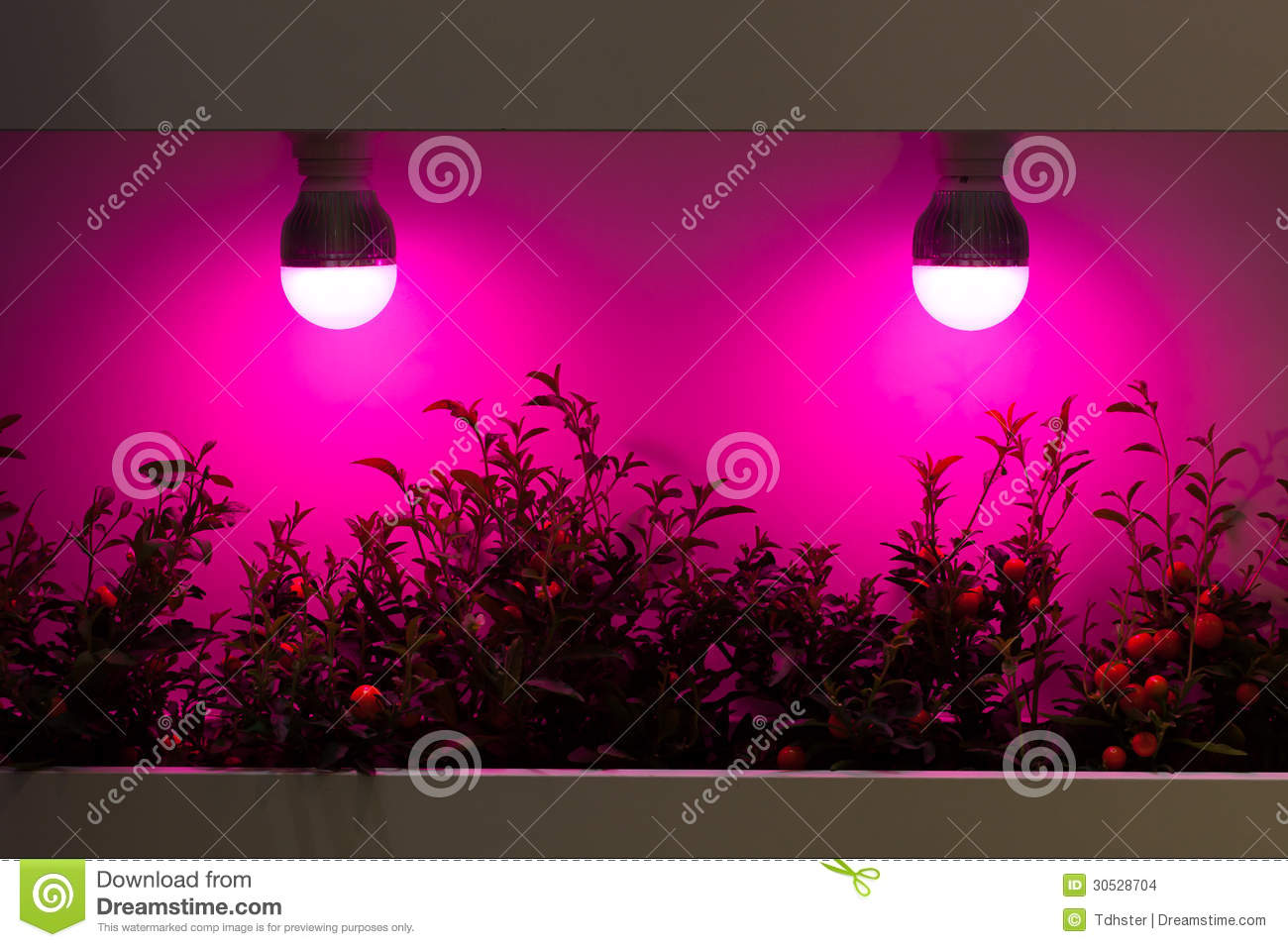 heating plants by lamps stock images image 30528704. Black Bedroom Furniture Sets. Home Design Ideas